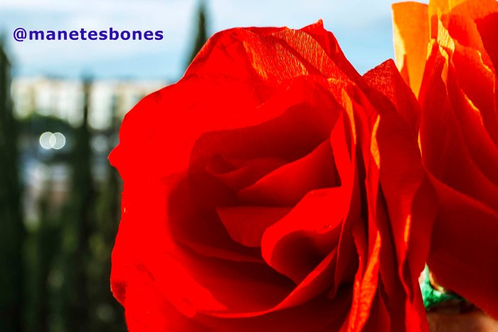 Rosas de papel pinocho